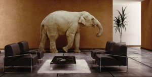 elephant in the room (13556370)